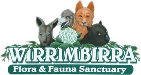 Wirrimbirra Sanctuary - Holiday Byron Bay