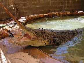 Wyndham Zoological Gardens and Crocodile Park - Holiday Byron Bay