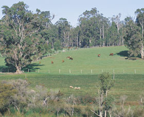 Scenic Drives - Bunbury Collie Donnybrook - Holiday Byron Bay
