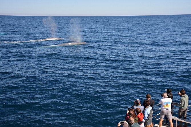 Blue Whale Perth Canyon Expedition - Holiday Byron Bay