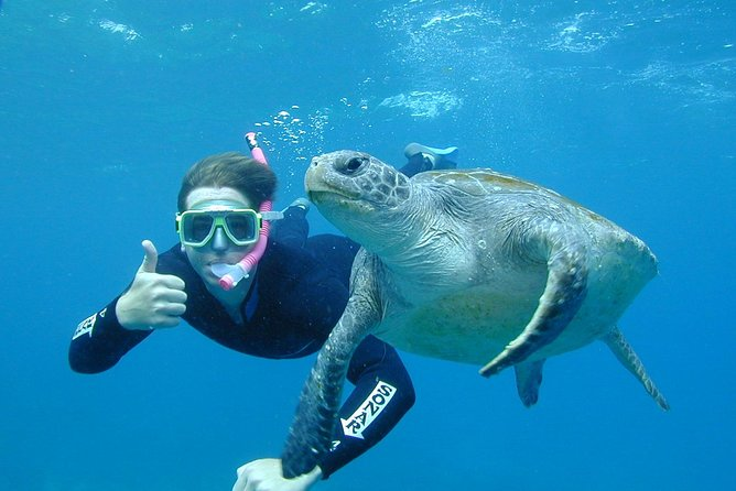 3-Hour Sea Turtle Snorkeling Experience in Byron Bay - Holiday Byron Bay