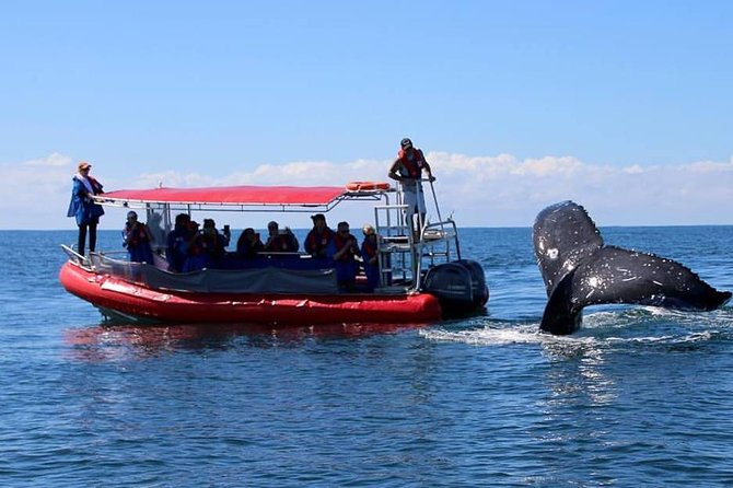 Byron Bay Whale Watching Cruise - Holiday Byron Bay