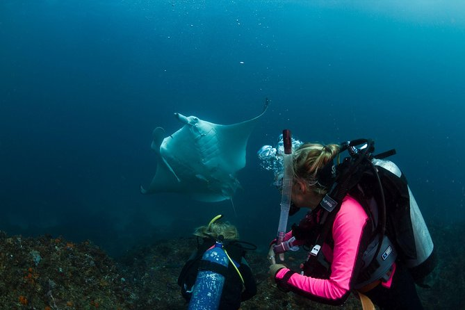 5-Hour Byron Bay Introductory Scuba Diving Tour - Holiday Byron Bay
