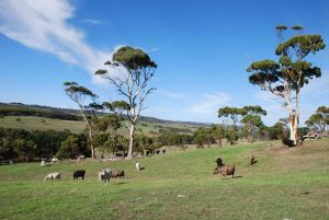 Lisieux Farm Bed and Breakfast - Holiday Byron Bay